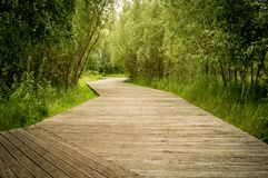 Wooden hiking path in the park Royalty Free Stock Images
