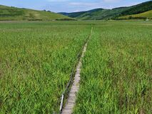 Empty wooden pathway in reed field at Sic, Romania