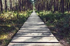 Empty wooden pathway in the woods Royalty Free Stock Images