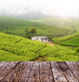 Empty wooden planks with blur tea plantation Stock Image