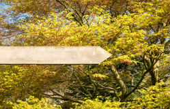 Empty Wooden Sign in front of a Majestic Tree. Empty blank wooden sign with no writing in the forest in front of a beautiful majestic tree with yellow green stock image