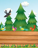 An empty wooden signboard with birds near the pine trees Royalty Free Stock Image