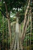 Empty wooden suspension bridge. In jungle stock photography