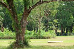 Empty wooden swing hanging from a big tree in the green garden. Tropical Tree Stock Photos