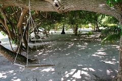 Wooden swing in the shade of some tropical trees on an island in the Maldives. An empty wooden swing hangs from a branch under the shade of tropical foliage. The stock photography