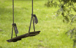 Empty wooden swing on ropes Stock Images