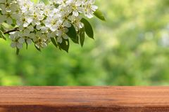 Empty wooden table and cherry branch. Above the empty table hung a cherry branch. A place to introduce your products Royalty Free Stock Images