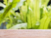 Empty wooden table with defocus of green leaf background stock photo