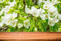Empty wooden table with spring background of blossoming wild apple tree. Can be used for display or montage product stock photo
