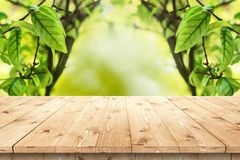 Empty wooden table in a sun drenched summer garden Royalty Free Stock Image