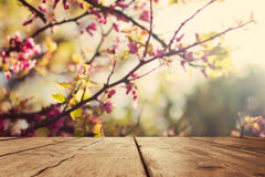 Empty wooden vintage table board over spring blossom bokeh background royalty free stock images
