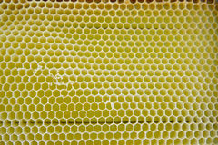 Empty yellow bee cells, background Royalty Free Stock Images