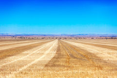 Empty yellow fields and bright blue sky in Australia Stock Image