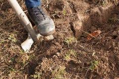 Empuje del hombre una pala en el jardín Trabajo agrícola Preparación para el cultivo de verduras El otoño limpia imagen de archivo libre de regalías