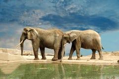 Empurrando o elefante Fotos de Stock Royalty Free