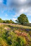 Emsworthy Mire on Dartmoor Royalty Free Stock Photo