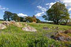 Emsworthy Mire on Dartmoor Stock Photography