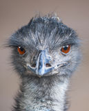 Emu Images stock