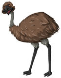 Emu bird with brown feather Royalty Free Stock Images