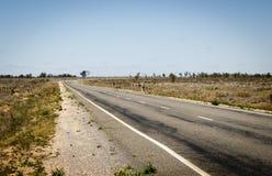 Emu Crossing Road Stock Images