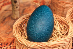 Emu eggs Royalty Free Stock Photos