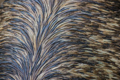 Emu feathers pattern background Stock Image