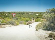 Emu geben Zeichen nach Stockfotografie