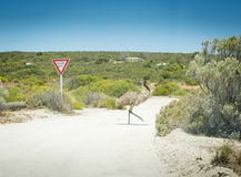 Emu Give Way Sign Stock Photography