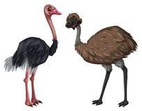Emu i struś na białym tle royalty ilustracja