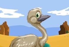 Emu i vildmarken vektor illustrationer