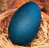 Emu jajka Obrazy Stock