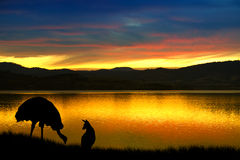 Emu and kangaroo in Australia. Emu and kangaroo against a vibrant sunset over the bay in Tasmania, Australia Royalty Free Stock Photos