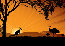 Emu kangaroo sunset Stock Image