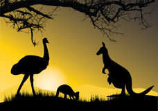 Emu and kangaroos Stock Photo