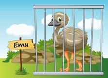 Emu na gaiola Foto de Stock Royalty Free