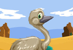 Emu in the outback Royalty Free Stock Image
