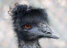 emu portret Fotografia Royalty Free