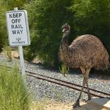 Emu on the railway. An Emu crossing the miniature railway line at the Cohunu Koala Park in Western Australia. The sign says Keep off the Railway Use Pathways stock photography