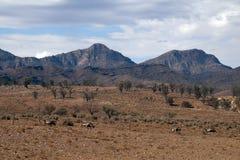 Emu som går över ointressant landskap med kullar i avstånd royaltyfri fotografi