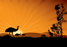 Emu in sunset Royalty Free Stock Images
