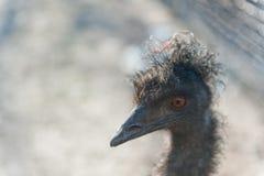EmuBird Στοκ εικόνες με δικαίωμα ελεύθερης χρήσης
