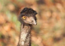 Emunahaufnahme Lizenzfreies Stockbild