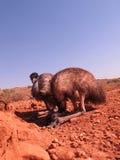 Emus, australia Royalty Free Stock Image