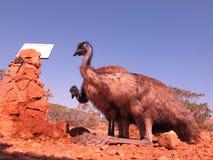 Emus, Australien Lizenzfreie Stockfotografie