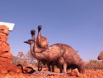 Emus, Australien Lizenzfreies Stockbild