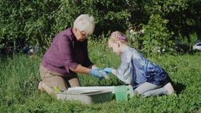 En äldre kvinna med en flicka som planterar blommor i gården Aktivt högt folkbegrepp stock video