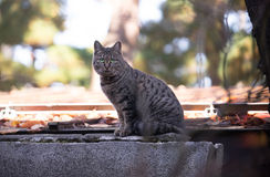 En älsklings- Cat Sitting arkivbild