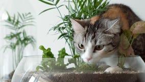 En älsklings- katt sniffar gröna växter i glass krukor under räkningar lager videofilmer