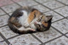 En älskvärd hemlös katt arkivbilder