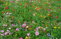 En äng av lösa blommor arkivfoto